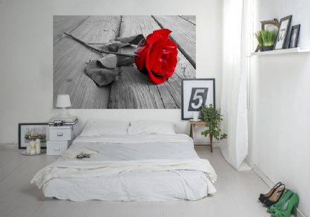 Red rose wall mural for wall - M